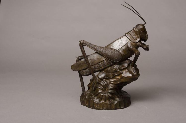 Picture of Grasshopper