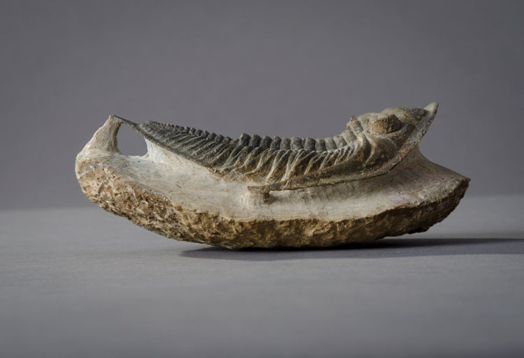 Picture of Cast Fossil