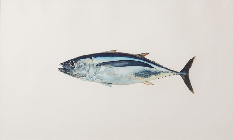 Picture of Albacore