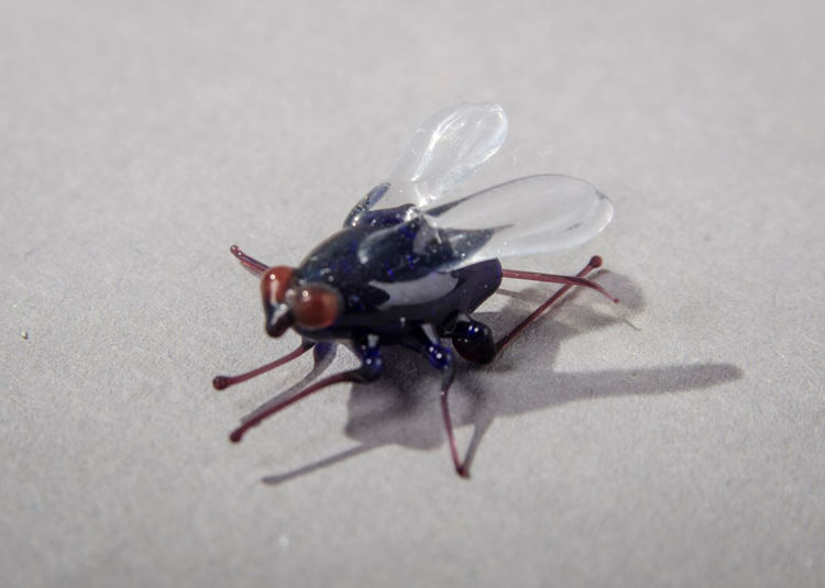 Picture of Fly