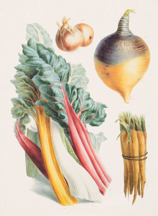 Picture of Root Vegetables