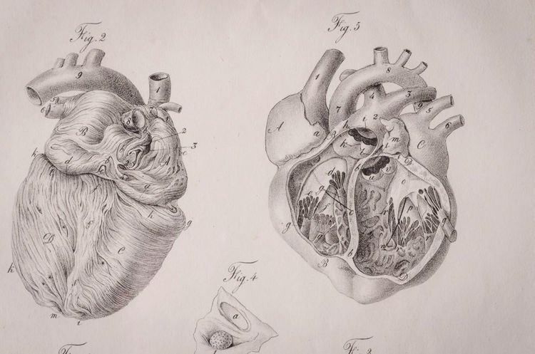 Picture of Anatomical Heart