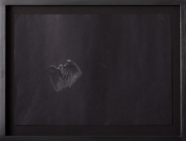 Picture of Bird Still