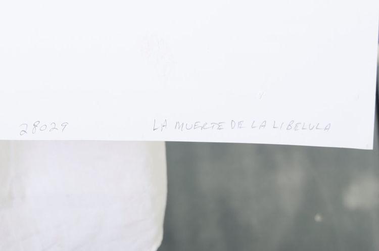 Picture of Le Muerte de la Libelula