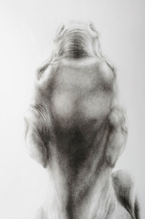 Picture of Cow Fetus