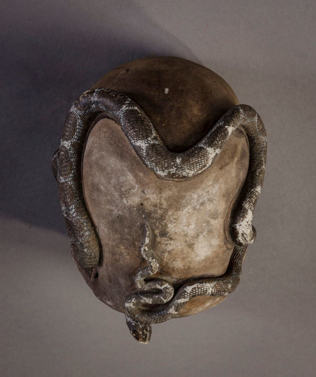 Picture of Detached Skull with Snake