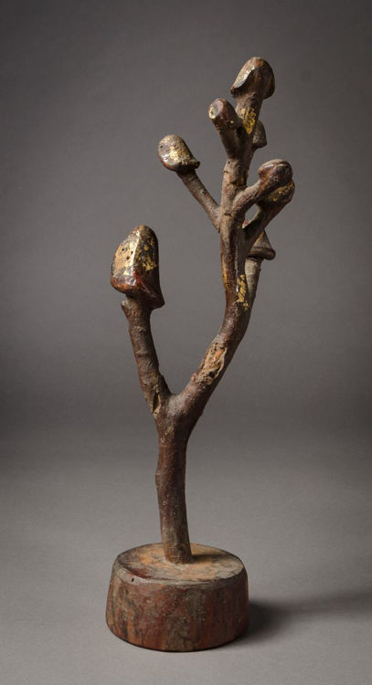 Picture of Penis Tree
