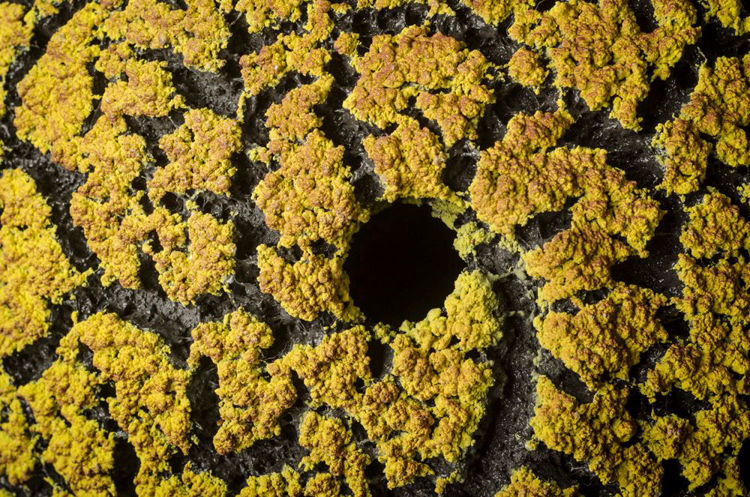 Picture of Yellow/Red Lichen Vase